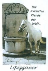 Die schönsten Pferde der Welt - LIPIZZANER